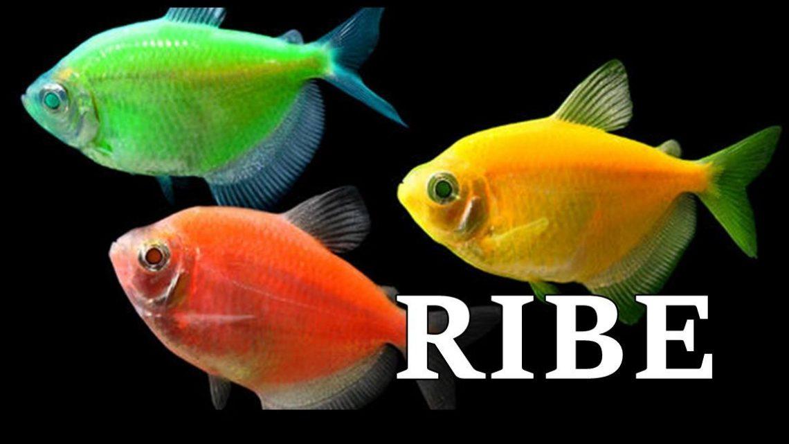 Ribe: Emotivna bica – Za srecu im je potrebno malo, ali za tugu jos manje!
