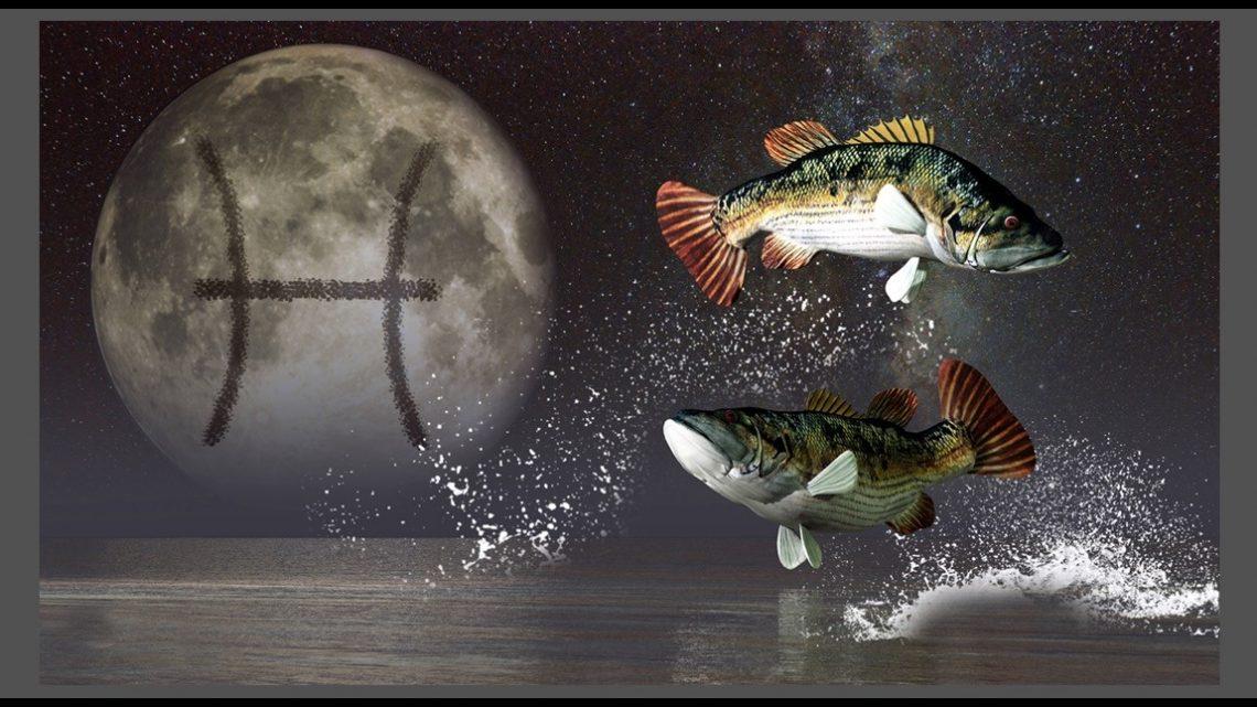 Ribe: Svima ulepsavaju dane – Od njih niko ne zeli da ode!