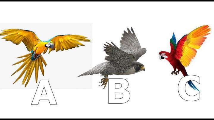 Osmesi ili veliki bol: Ptica koju izaberes otkriva sta te ocekuje!